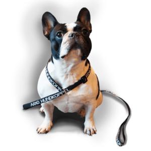 Britta, Fransk bulldog, med Arno hundkoppel